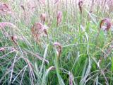 (Sier)gras, veelzijdig stukje groen