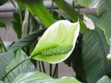 Een frisse neus met kamerplanten