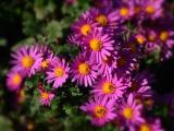 Een kleurige tuin in de herfst