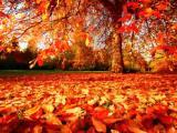Herfst laat van zich horen