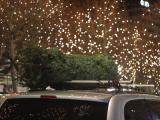 Kies de juiste kerstboom