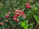 Planten in de herfst