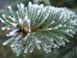 Verzorging van je kerstboom