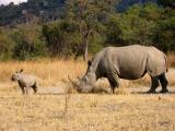 Zimbabwe: arm land met rijke natuur