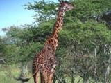 Tanzania: het wilde Afrika