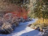 Hoe maak je de tuin winterklaar?