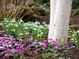 Tuin lenteklaar maken
