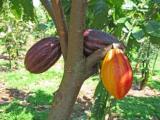 Chocolate Tour op de Dominicaanse Republiek