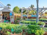 Beste winkels voor tuinplanten