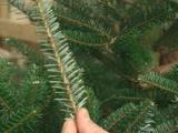 Op zoek naar de juiste kerstboom