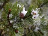 Kerstbomen in alle soorten
