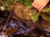 Lek in de vijverfolie opsporen en verhelpen