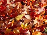 Hergebruik de herfstbladeren