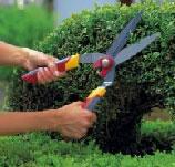 Hoe snoei je een buxus - Hoe om te beseffen een tuin ...