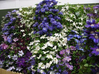 Vaste planten borders op kleur  Kijktuinen Nunspeet