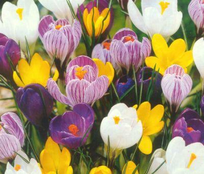 Afbeeldingsresultaat voor lentebloeiers