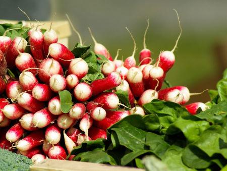 Groenten om eenvoudig zelf te kweken for Groenten tuin