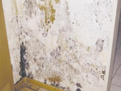 Badkamer Plafond Afsteken : Schimmel op slaapkamer help schimmel in de badkamer fantvnl with
