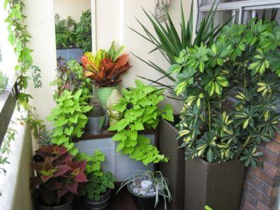 Planten Voor Balkon.Een Balkontuin Fantv Nl
